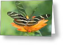 Butterfly In Motion #1967 Greeting Card