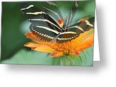 Butterfly In Motion #1968 Greeting Card