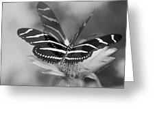 Butterfly In Motion Greeting Card