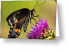 Butterfly In Nature Greeting Card