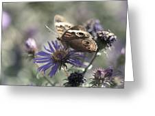Butterfly In Pastel - Buckeye On Asters Greeting Card