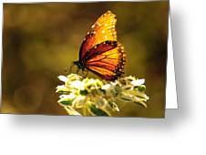 Butterfly In Sun Greeting Card