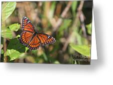 Butterfly In The Everglades Greeting Card
