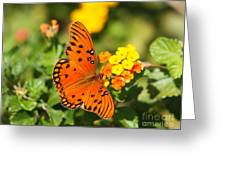 Butterfly In The Glades - Gulf Fritillary Greeting Card
