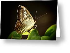 Butterfly In The Light Greeting Card