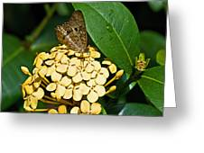 Butterfly Ins 17-1 Greeting Card