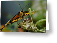 Butterfly Kiss Greeting Card