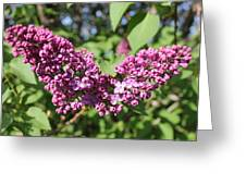 Butterfly Lilac Greeting Card