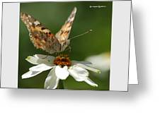 Butterfly Macro Photography Greeting Card