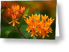 Butterfly Milkweed Greeting Card