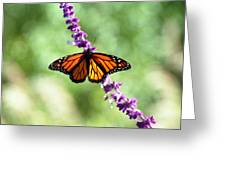 Butterfly - Monarch Greeting Card