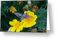 Butterfly Moth Greeting Card