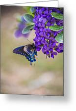 Butterfly Mountain Greeting Card