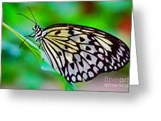 Butterfly On A Leaf Greeting Card
