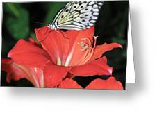 Butterfly On A Lily Greeting Card