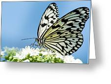 Butterfly On Blue Greeting Card