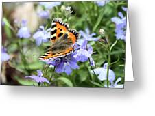 Butterfly On Blue Flower Greeting Card
