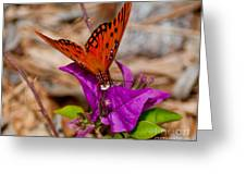 Butterfly On Bouganvilla Greeting Card