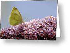Butterfly On Buddleia Greeting Card