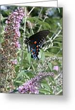 Butterfly On Bush Greeting Card