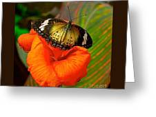 Butterfly On Canna Flower Greeting Card