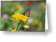 Butterfly On Carnation Greeting Card
