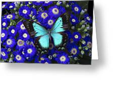 Butterfly On Cineraria Greeting Card