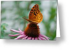 Butterfly On Cornflower Greeting Card