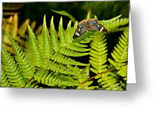 Butterfly On Fern Greeting Card