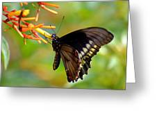 Butterfly On Firebush Greeting Card
