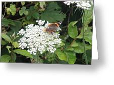 Butterfly On Lace Greeting Card