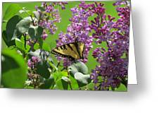 Butterfly On Lilac Greeting Card by Diane Mitchell