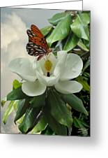 Butterfly On Magnolia Blossom Greeting Card