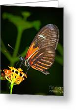 Butterfly On Orange Bloom Greeting Card