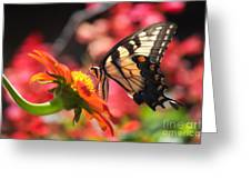 Butterfly On Orange Sunflower Greeting Card