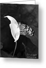 Butterfly On Peace Lilly Greeting Card