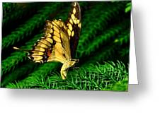 Butterfly On Pine Greeting Card