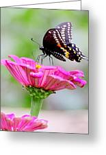 Butterfly On Pink Flower Greeting Card