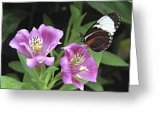Butterfly On Pink Lillies Greeting Card