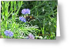 Butterfly On Purple Flower Greeting Card