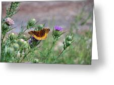 Butterfly On Thistle Greeting Card