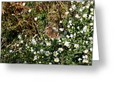 Butterfly On White Flowers Greeting Card