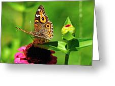 Butterfly On Zinnia Flower 2 Greeting Card