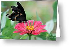 Butterfly On Zinnia Greeting Card