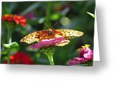Fritillary Butterfly On Zinnia Greeting Card
