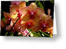 Butterfly Orchids Greeting Card