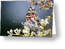 Butterfly - Painted Lady - Tasty Out Here Greeting Card