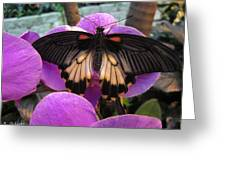Butterfly Palace Greeting Card