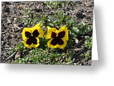Butterfly Pansies Greeting Card