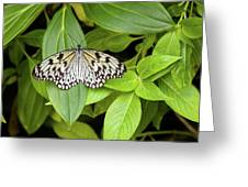 Butterfly Perching On Leaf In A Garden Greeting Card